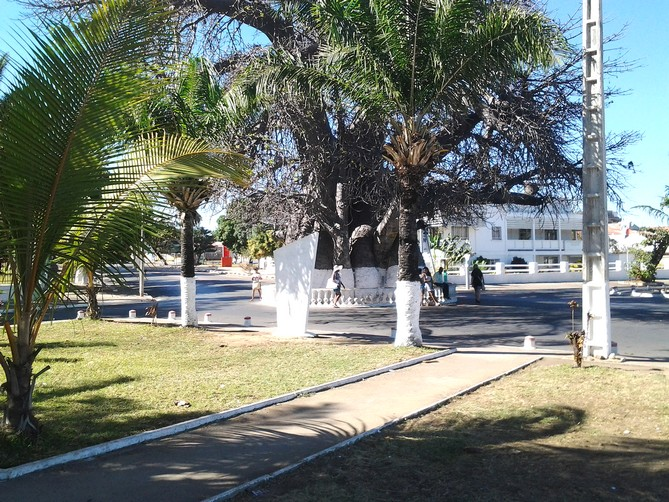 MU Mada nouv juillet-sept 2017 - Le baobab, emblème de la ville de Mahajanga